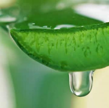 Aloe Vera a Wonder Juice For Various Remedies